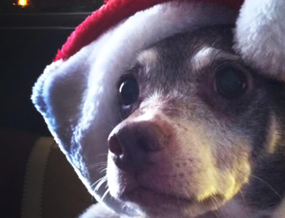 Holiday Pet Travel